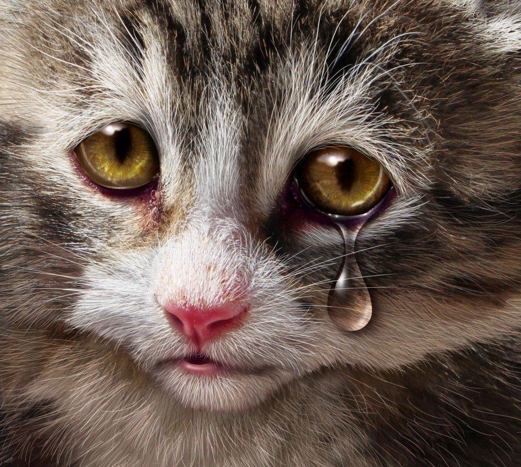 Animal Cruelty Chicago Criminal Defense Attorney